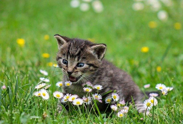 kočka na louce