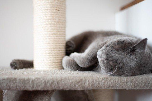 kočka na škrabadle
