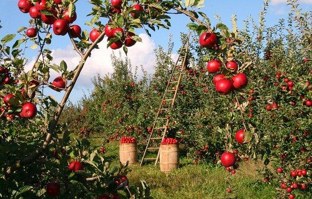 Čerstvé a šťavnaté ovoce